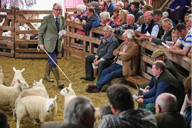 LAIRG, SCOTLAND - AUGUST 15:  People watch as sheep farmers gather at Lairg auction for the great sale of lambs on August 15, 2017 in Lairg, Scotland. Lairg market hosts the annual lamb sale, which is the biggest one day livestock market in Europe, when some twenty thousand sheep from all over the north of Scotland are bought and sold.  (Photo by Jeff J Mitchell/Getty Images)
