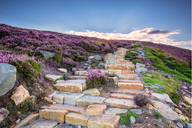 Popular with walkers and hikers the Simonside Hills are covered with heather in late summer. they are part of Northumberland National Park overlooking Coquetdale and Cheviot Hills
