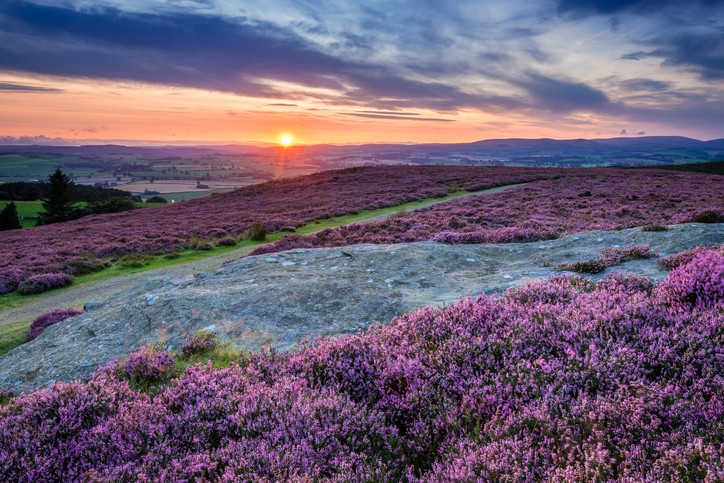 Rothbury Terraces walk offers views over the Coquet Valley to the Simonside and Cheviot Hills, heather covers the hillside in summer