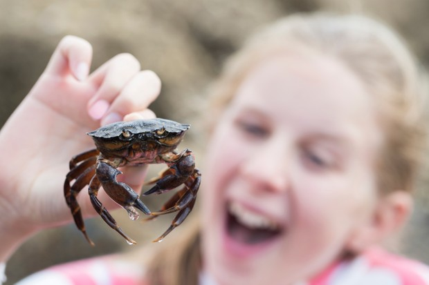 Young Girl Holding Crab Found In Rockpool On Beach