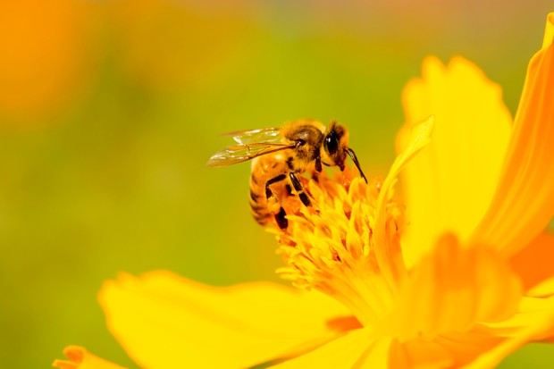 Beautiful nature with bee on daisy flower.