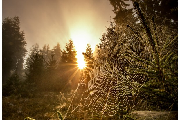 Close up of spider web in mountain forest with sun rising in background