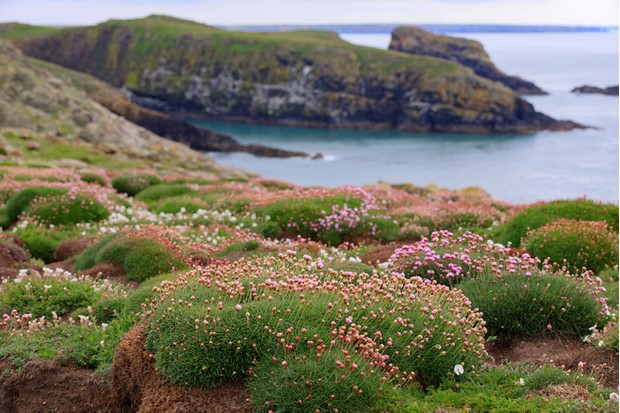 landscape of Skomer Island along the Welsh coast