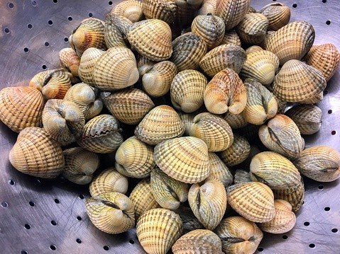 Cockles shellfish bivalves in colander