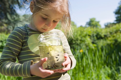 Young girl looking at tadpoles outside