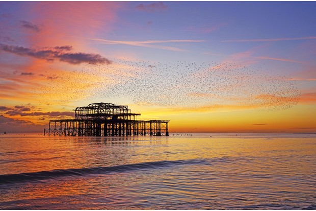 Sunset at the West Pier, Brighton with a starling murmuration in full swing