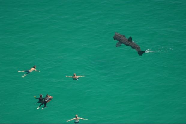 Basking Sharks, Swimmers, Porthcurno, Cornwall, England