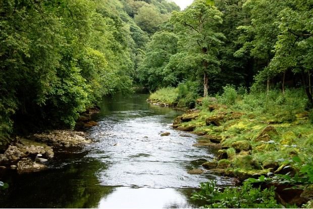 A peaceful setting of the River Wharfe near the Strid and Bolton Abbey, Yorkshire