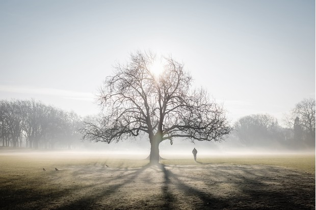Lone tree on frosty Peckham Rye Common, London