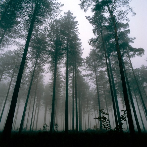 Forest at Thetford, UK, Wintertime