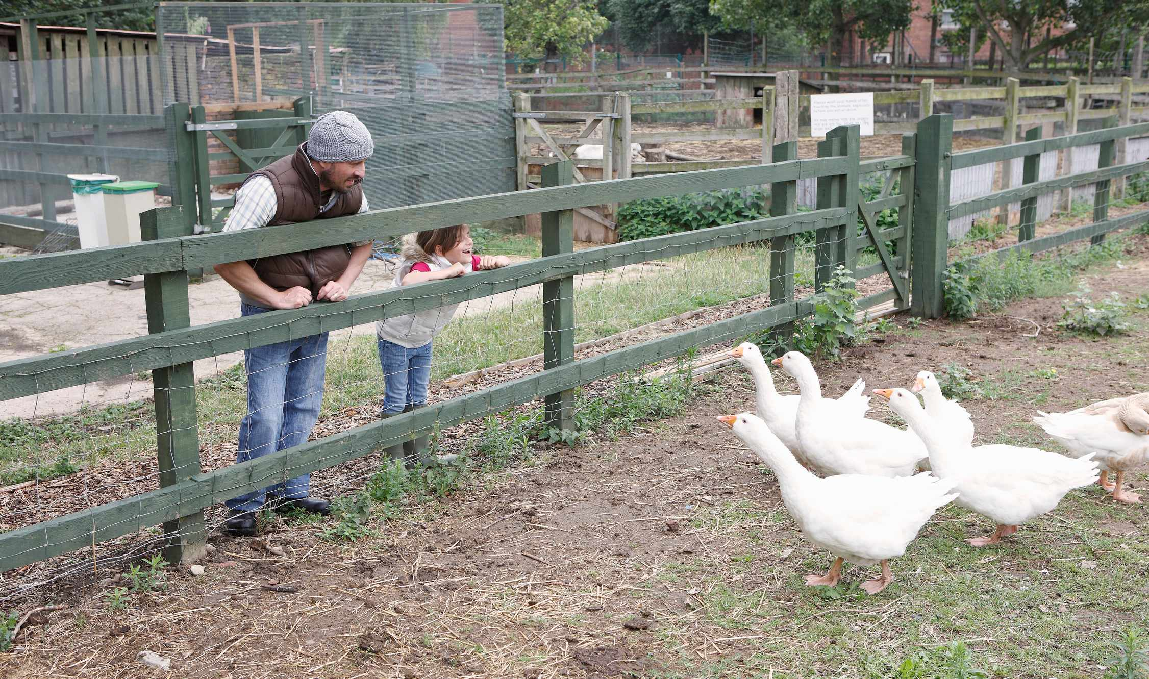 father and daughter visiting the geese a the city farm
