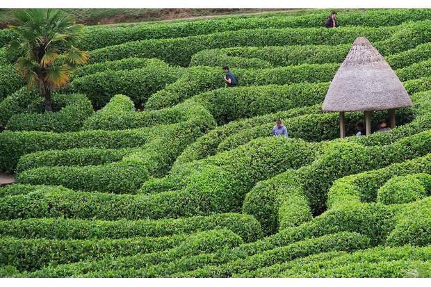 Glendurgan-garden-1b2565d