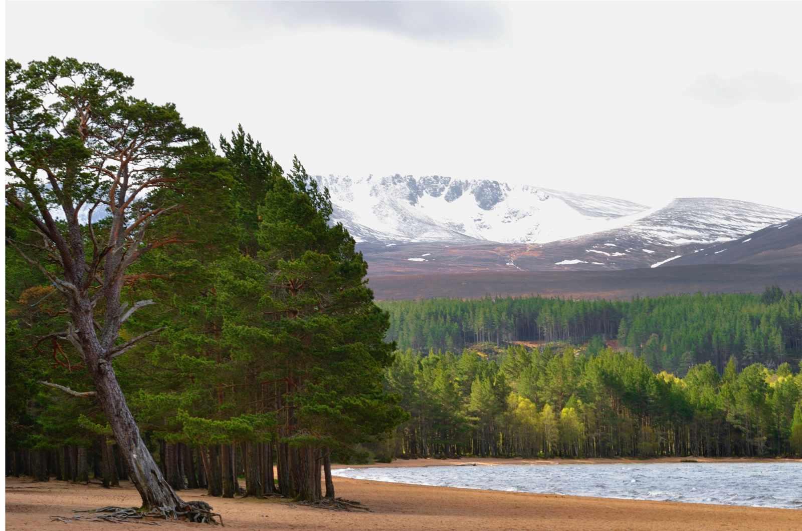 Glenmore-Forest-Park-2f8ab4e