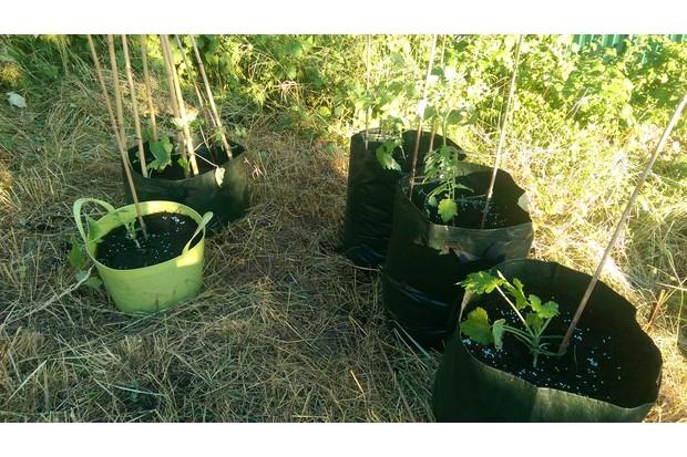 Grow20sacks_0-109272b