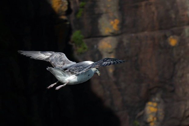 Find a spot beside the cliffs and see how many species you can spot