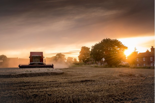 Harvest-Norfolk-a665b23