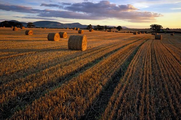 Harvested-crop-UK-757b28e