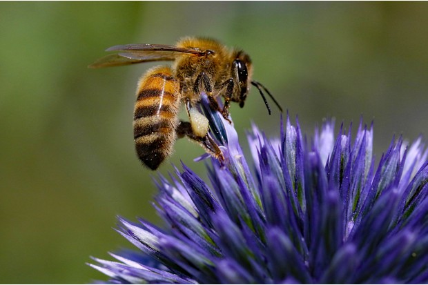 Honey20bee-3f0fc34