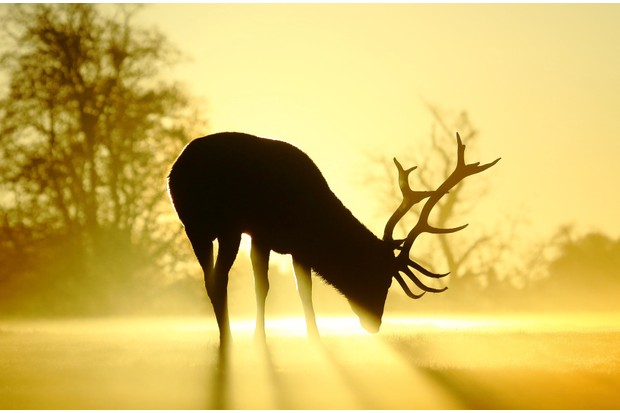 JAN20-Sunlit Stag by Steve Adams ©Steve Adams