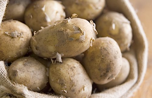 Meet Britain's most celebrated potato, the Jersey Royal, and top ...