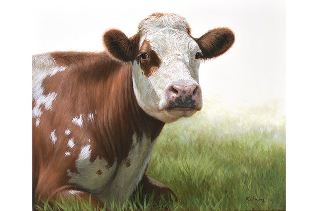 Jessie20the20Cow-9be34a0