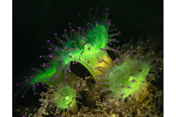 Jewel_Anemone_GettyImages-42a6a1f