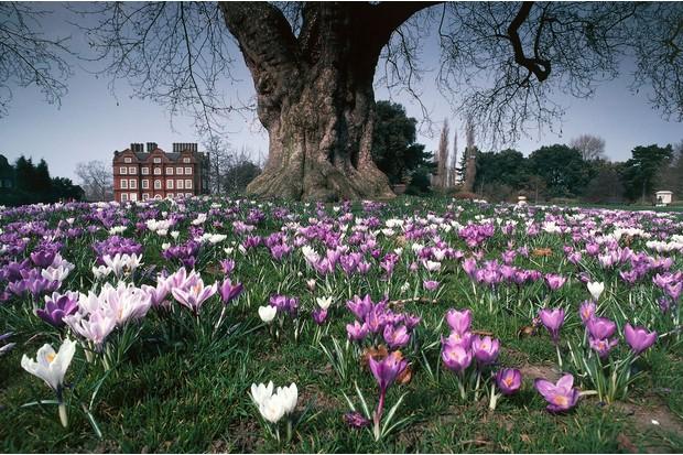 Kew-Palace-ce71907