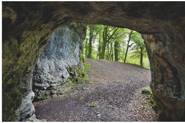 Bear and hyena bones were found in King Arthur's Cave