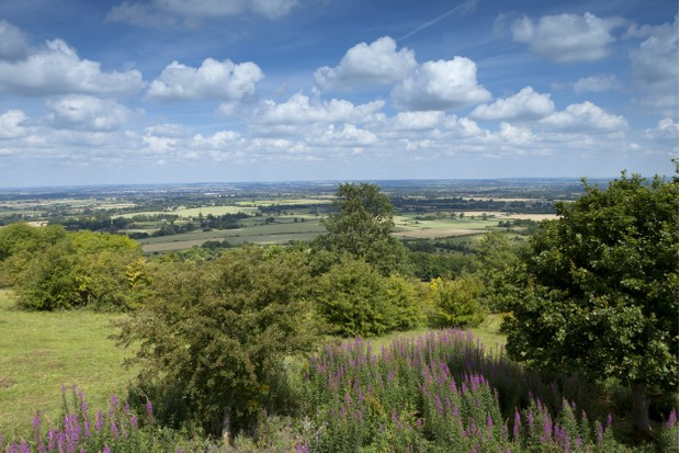 View north from Coombe Hill, Buckinghamshire, in July.