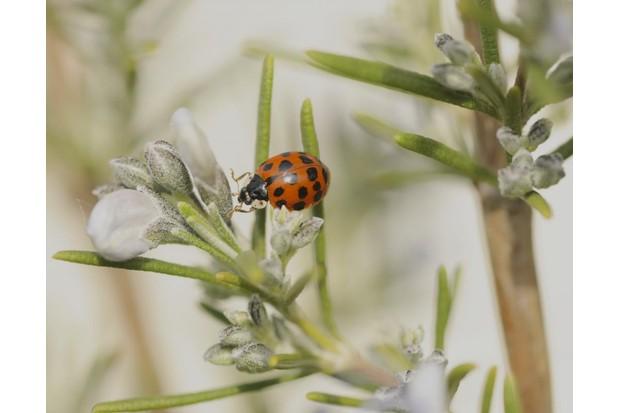 Ladybird_1-cf0b0f4