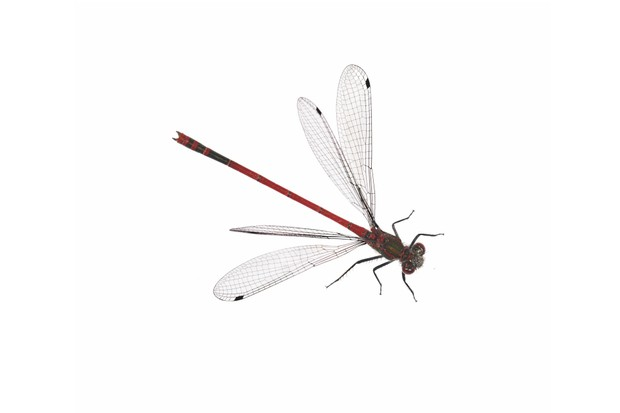 Large20red20damselfly-653ec0e