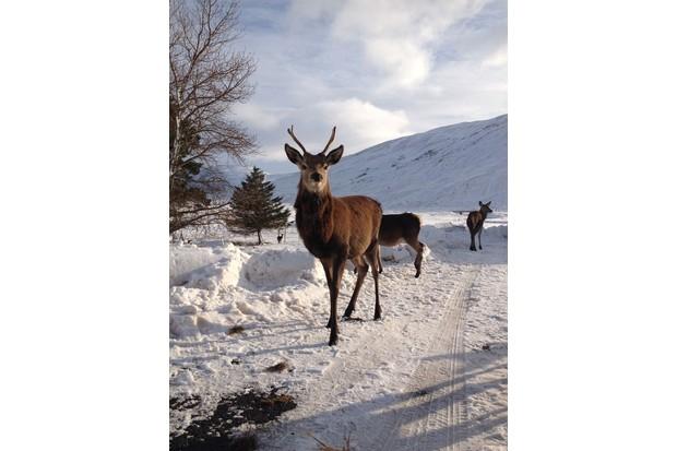 Local-wildlife-red-deer-28229-d2b839c