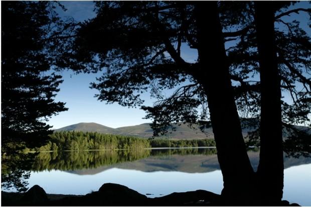 Loch Garten RSPB reserve. Speyside, Scotland. August 2007.
