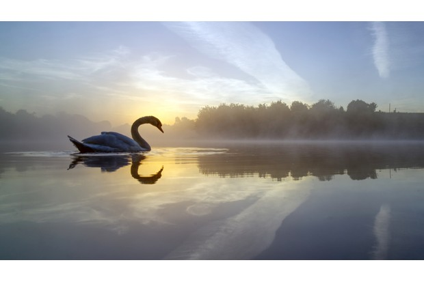 MARCH20-Swan Lake by Mark Buchan Jones ©Mark Buchan Jones
