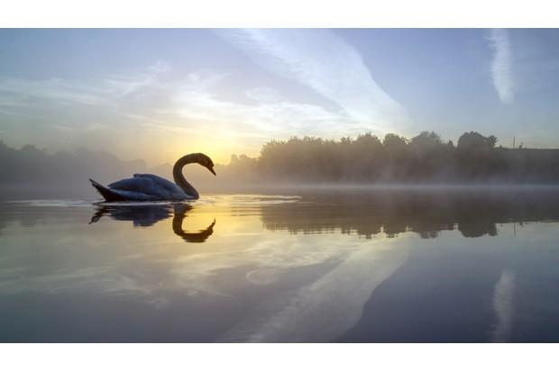 MARCH20-Swan Lake by Mark Buchan Jones ©Mark Buchan Jones