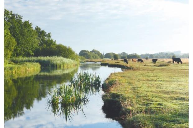 Marsh court River