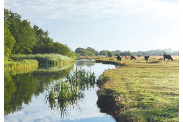 Marshcourt River – a tributary of the Test – meanders between the cattle-grazed water meadows of Stockbridge Common Marsh and a band of deciduous woodland.