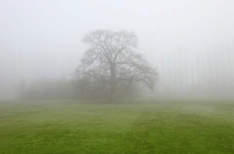 Mistytree-a7e20ae