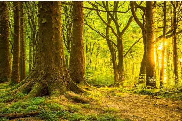 National-Tree-Week-bc74e37