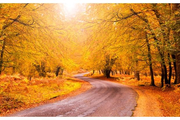 Autumn colours along road