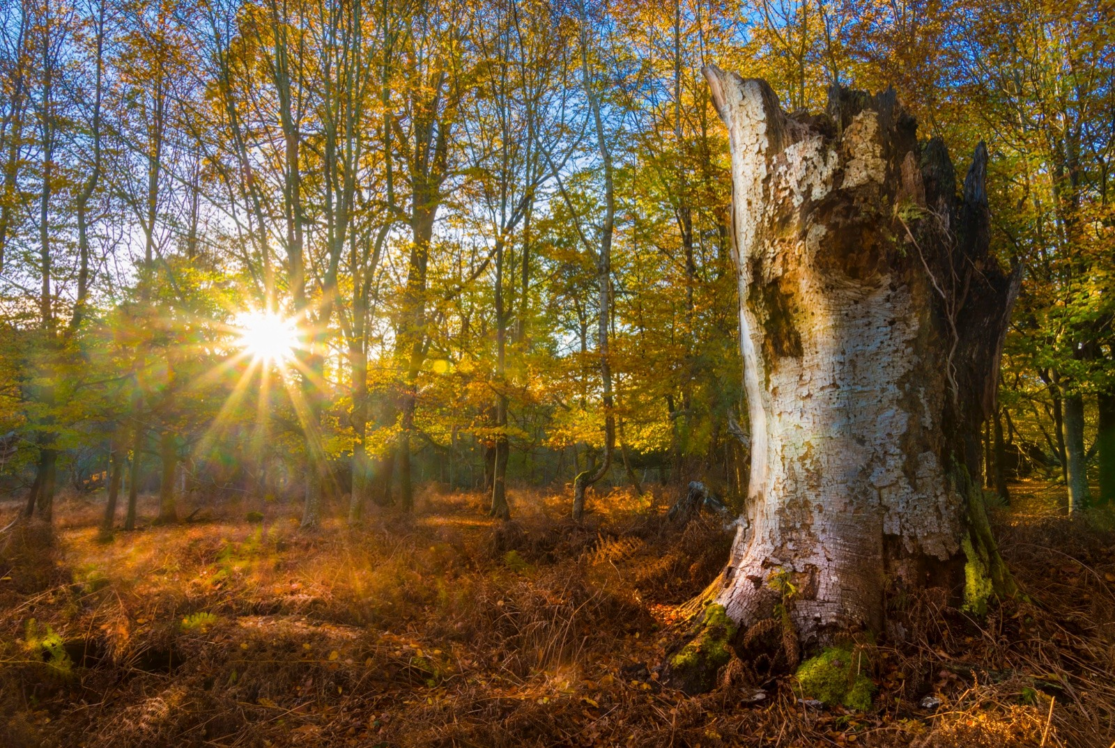 Bright sunlight on a clear autumn day streams through trees and leaves in the New Forest