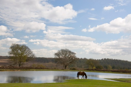 Bratley View New Forest