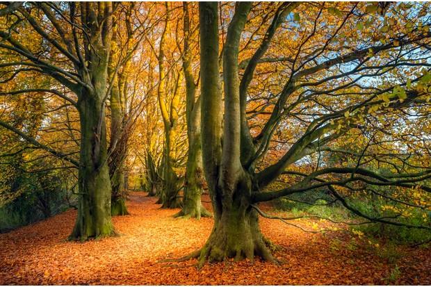 OCT20-Autumn Flame by Simon Garratt ©Simon Garratt