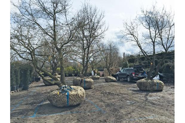 Oak-Trees-IMG_4886-8b21bb2