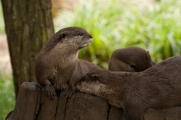 Otter-f494010