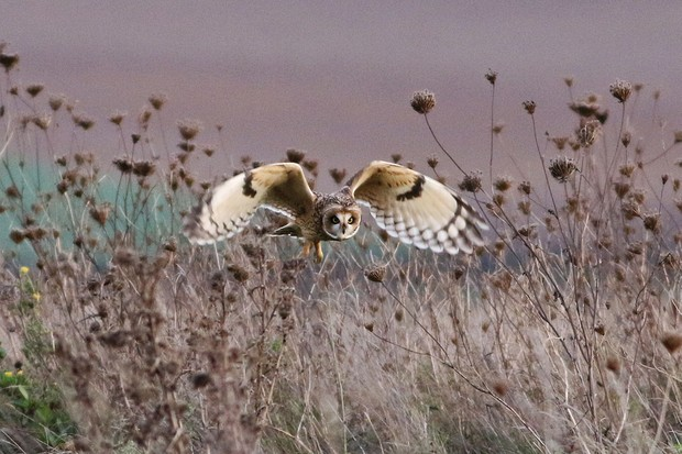 Owl-on-the-prowl-Ron-Baber_0-c50939c