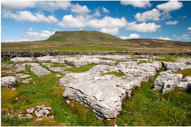 Limestone outcrop with Penyghent in the background, on a summers day. Yorkshire, UK