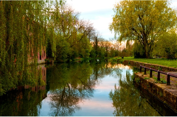 Canal and trees