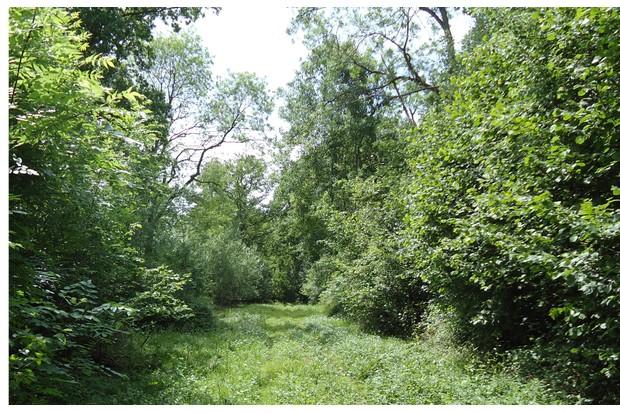 Priestley Wood