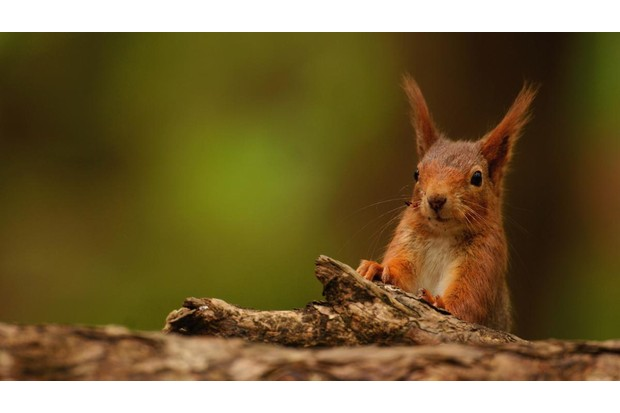 Red20squirrel-d60731e